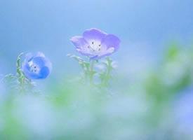 一组超美的好看花卉图片
