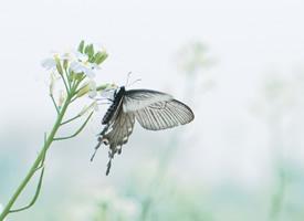 一组浪漫唯美的蝴蝶图片