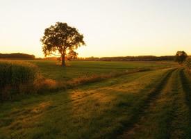 乡村里的田野图片