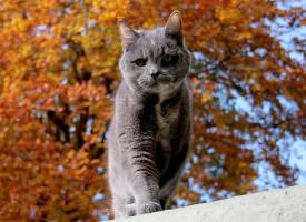 宠物猫咪意境图片