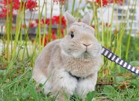 一组兔子的旅行日记图片