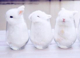 又白又软的小兔子,超级可爱