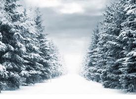 银装素裹的冬日雪景图片
