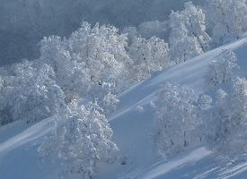 一组唯美的冬季雪景图片