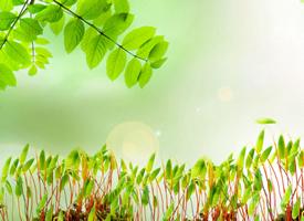 小清新绿色植物桌面壁纸