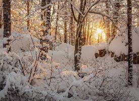 阳光充足,胜过一切过去的诗
