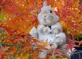 一组兔子的旅行日记