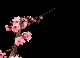 暗香疏影,皎洁月明的桃花香