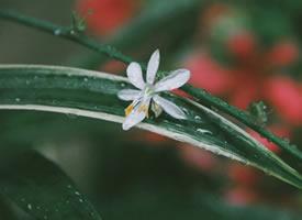 小清新雨后植物图片桌面壁纸
