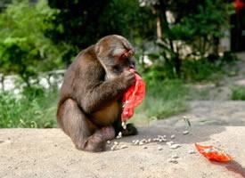 一组野生灵敏的小猴子