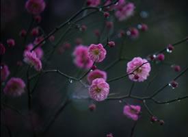 小桃枝头春带雨,和娇含泪