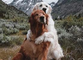 两只狗子,相拥走过世界