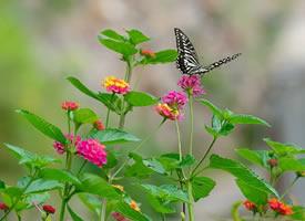 一组美美的蝶恋花图片