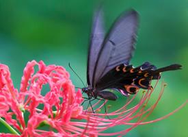 蝶恋花唯美意境高清桌面壁纸