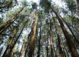 幽静茂密的树林图片