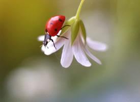 花卉与小瓢虫的美景图片