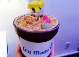 一组盆栽冰淇淋图片