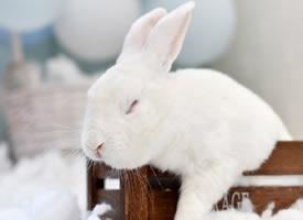 小兔子一个个都很有想法的样子