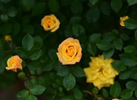 好看的鲜花花卉摄影图片桌面壁纸