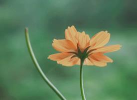 小清新植物花卉微距摄影桌面壁纸
