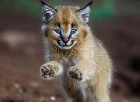 一组超萌的野生动物小宝宝