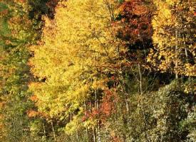 一组深秋的树林图片