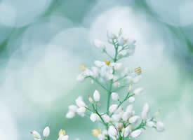 小清新植物南天竹高清桌面壁纸