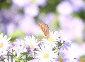 一组超美的蝶恋花图片欣赏