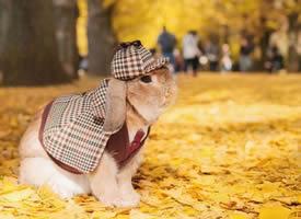 秋日里的侦探兔兔图片