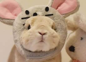 一组超可爱奶萌奶萌的小兔子