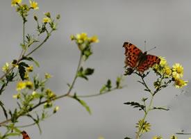 黄色花花上超美的花蝴蝶