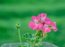 清新粉嫩花卉图片桌面壁纸