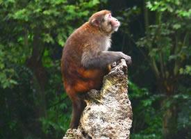 一组聪明可爱的猴子图片