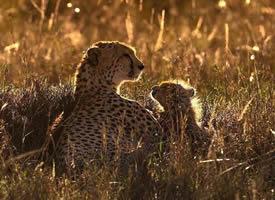 野生动物母亲与幼崽的相处时刻