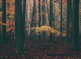 林间秋色,让人心静