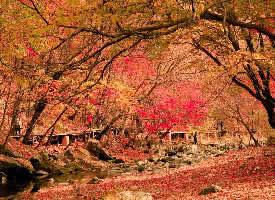秋季的关门山国家森林公园图片