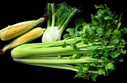 新鲜绿色的芹菜图片