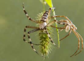 一组吓人的蜘蛛图片