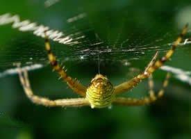 蜘蛛网上的蜘蛛图片