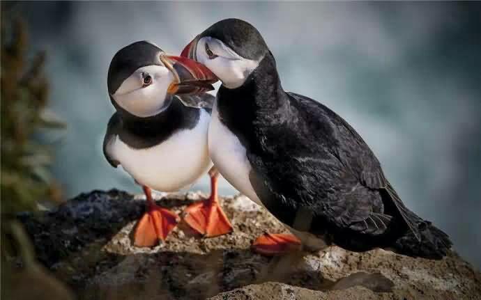 点击大图看下一张:姿态优美的善知鸟图片
