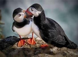 姿态优美的善知鸟图片
