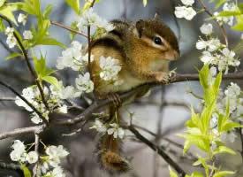 一组小巧灵活的花栗鼠图片