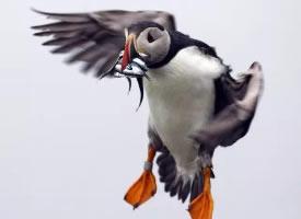 惹人喜爱的善知鸟图片