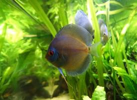 一组水里美丽的观赏鱼图片