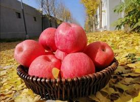 一组粉嘟嘟的红苹果图片