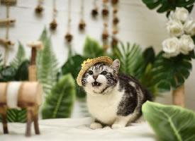 一组可爱的宠物猫摄影图片