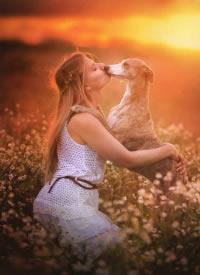 一组人与狗和谐生活的摄影图片