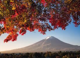 红枫掩映下的绝美富士山