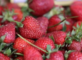 一组酸甜可口的草莓图片