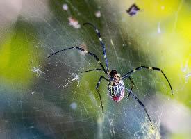 在网上辛苦劳动的蜘蛛图片